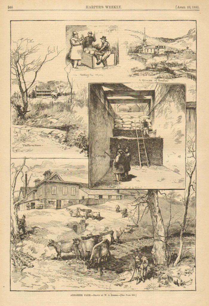 Illustrations of Arrareek farm from Harper's Weekly, 1881